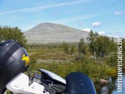 Moschusochsen in Norwegen Dovrefjell